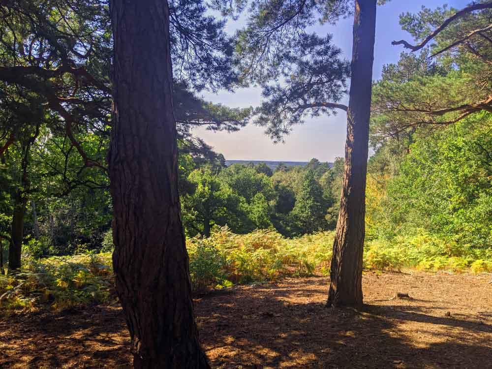 View from Finchampstead Ridges, Berkshire, UK