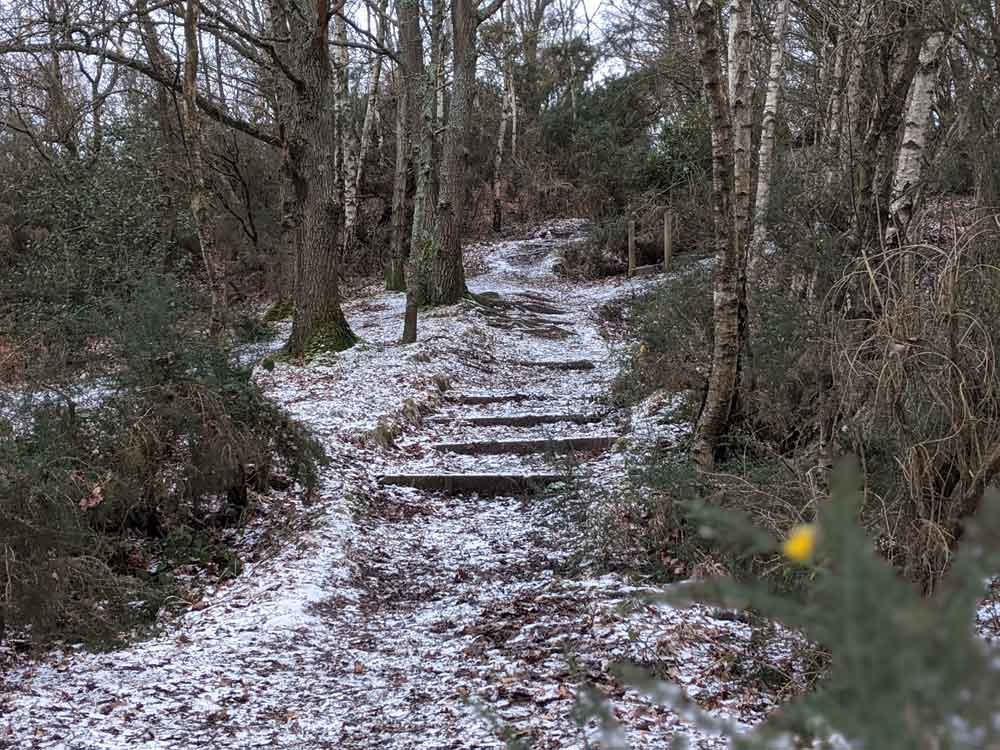 Snow covered steps in woods, Chobham Common, Surrey, UK