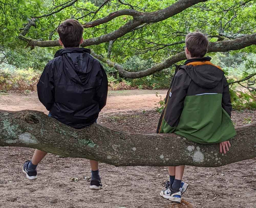 Two boys Climbing trees on North Downs Way, Surrey, UK