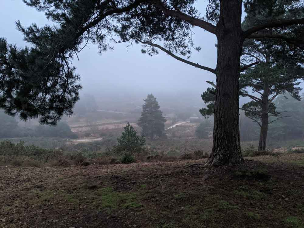 Misty view over heathland, , Barossa, , Surrey, UK