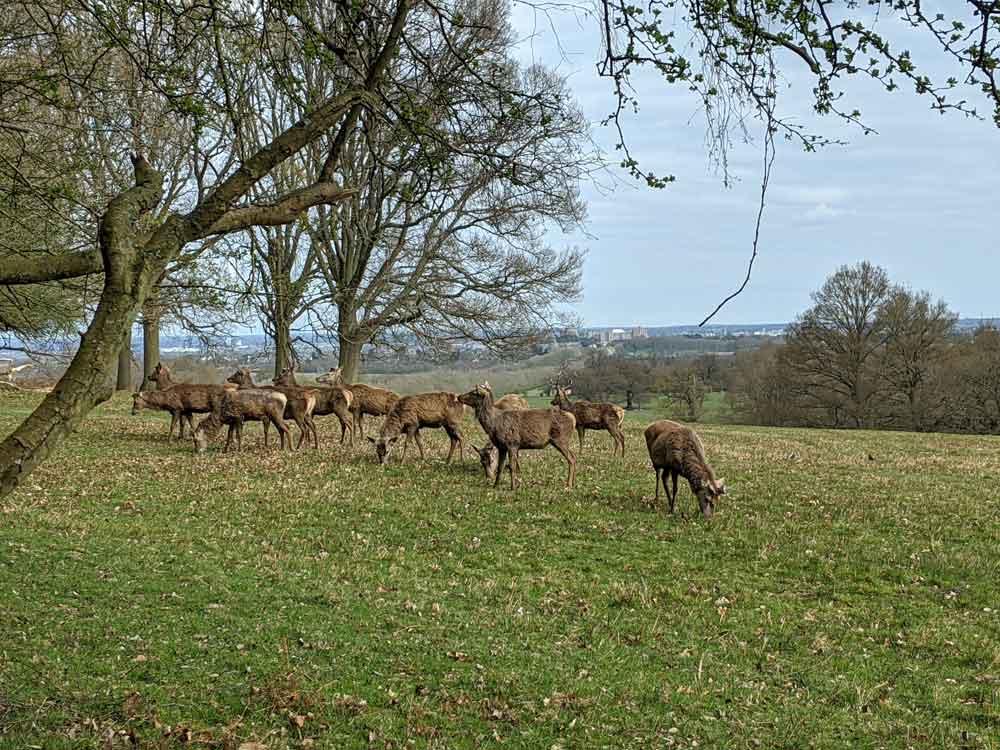 The Deer Park, Windsor Park, Berkshire, UK