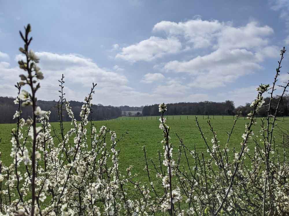 Views of Norbury Park, Surrey, UK