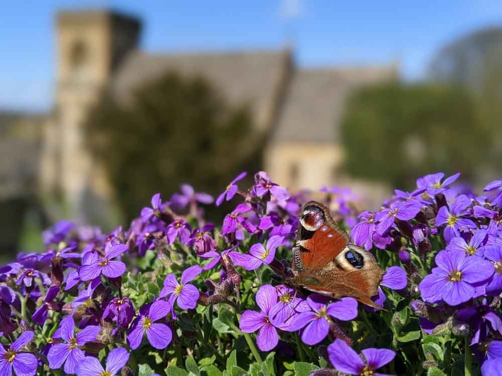 Butterfly at St Barnabas Church, Snowshill, Cotswold, UK