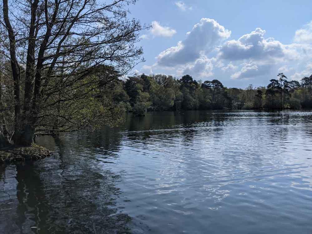 Circular walk at Longmoor Lake, California Country Park, Berkshire, UK