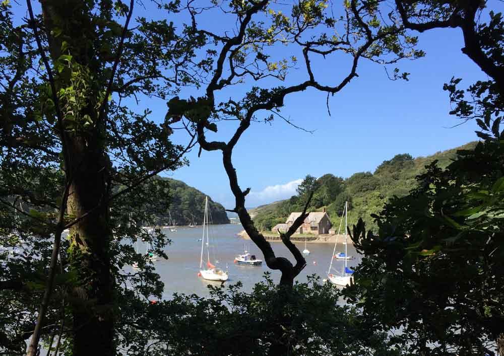 Views of boats through trees, Devon, UK