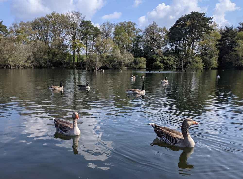 Longmoor Lake, California Country Park, Berkshire, UK