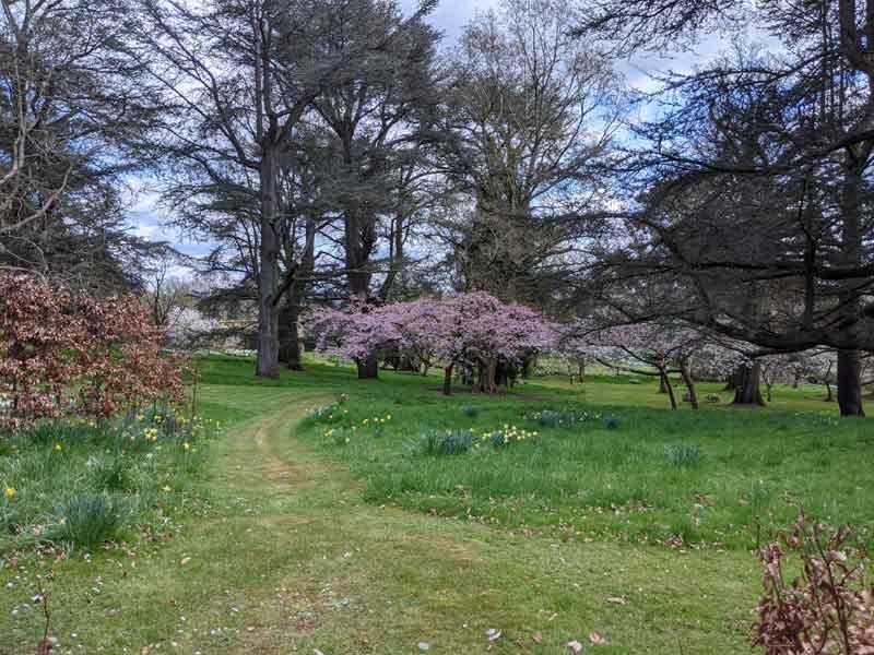 Trees at Batsford Arboretum, Batsford, Cotswold, UK