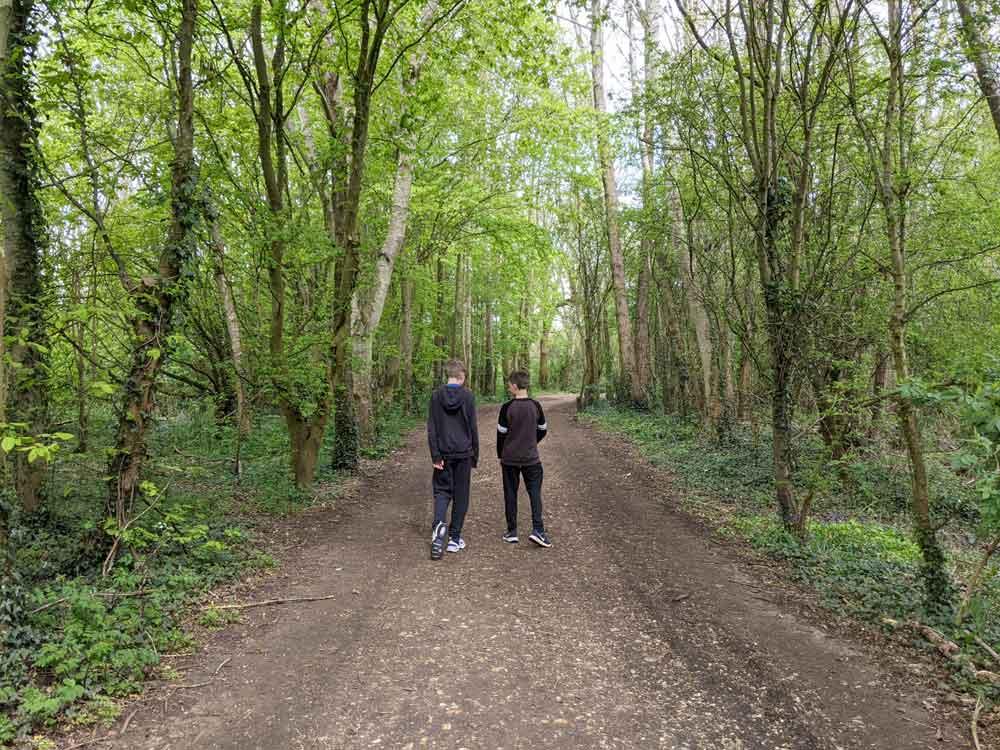 Woodland walk at Dinton Pastures, Berkshire, UK