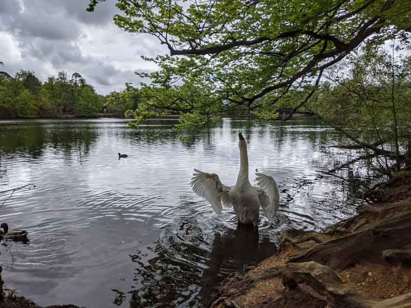 lake at Black Park, Buckinghamshire, UK