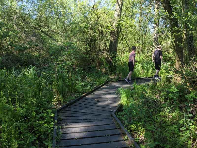 Boardwalk at Ranworth Nature Reserve, Norfolk, UK