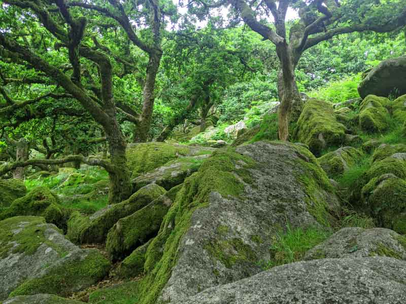 Boulders and Trees at Wistmans Wood, Devon, UK