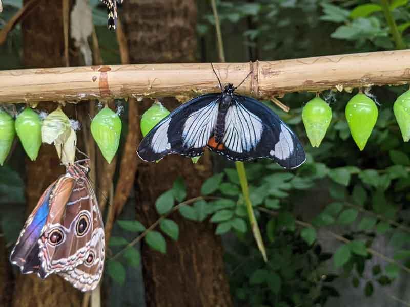 Butterfly and cocoons, Buckfastleigh, Dartmoor, UK