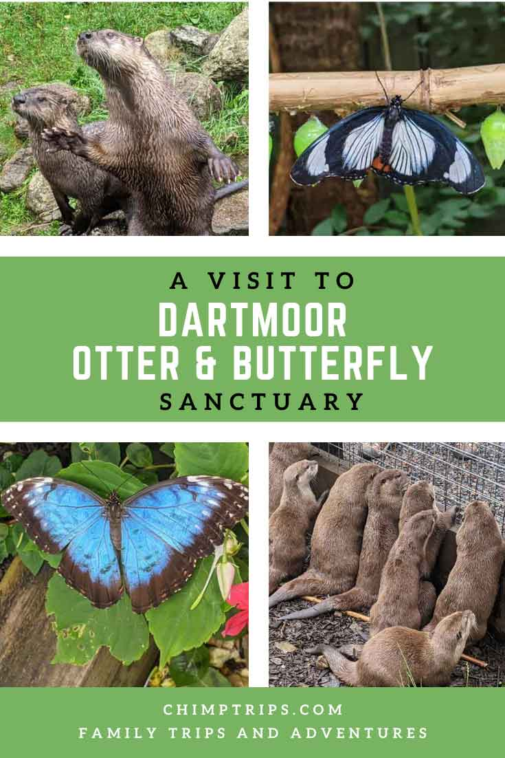 Pinterest: A visit to Dartmoor Otter and Butterfly Sanctuary, Dartmoor, UK