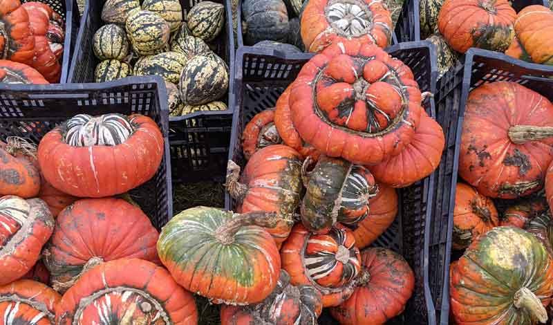 Baskets of Pumpkins, Surrey, UK