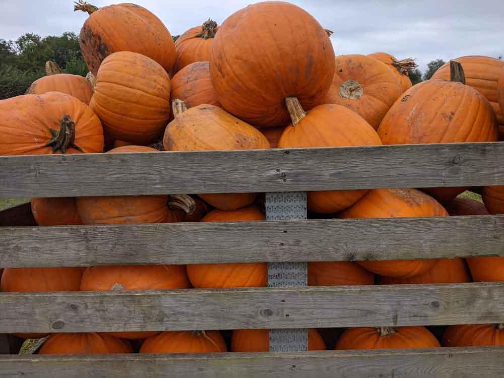 Crate of Pumpkins Surrey, UK