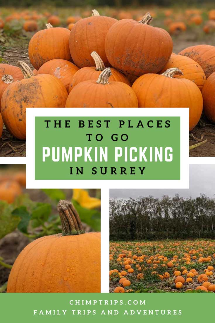 Pinterest: The best places to go pumpkin picking in Surrey, UK